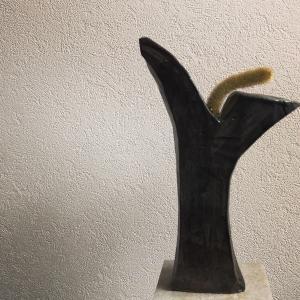 Y字黒燻角鉢 X アポロカクタス「金紐」