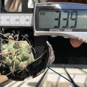 多肉植物測定記録 2021年9月