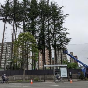 青葉区五橋中学校、東二番丁通側にあった背の高い木々が全て伐採されて無くなる!