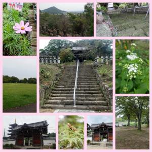 今日の散歩道 仏生山公園 法然寺