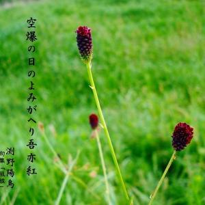 長崎原爆記念日