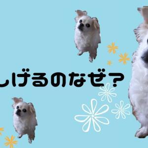愛犬が首をかしげるのはなぜ?可愛いしぐさの意味は何?どんな言葉に反応するの?