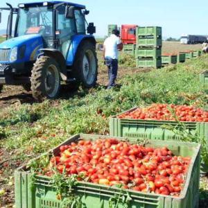 トマトソースの準備