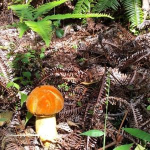 秋を楽しむ森林散歩