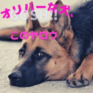 『オリバーな犬、(Gosh!!)コノヤロウ』1話ネタバレと感想│制約を逆手に取った自由な作品!みんな楽しそうにやってるなー