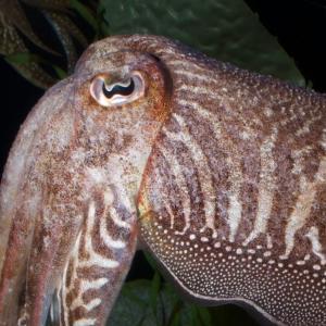 【生き物】やめろ!そんなW字型の目で私を見るなぁ!動物の種による瞳孔の違い