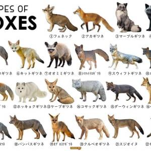 【生き物】キツネの種類、22タイプ(+5)