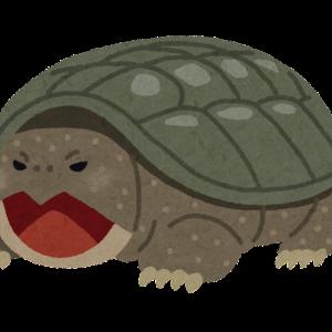 【ポケユナ】亀の呪い、ピント、アンプのバグが修正された模様