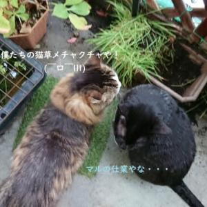 カルナ&アモルのぼやき (^_^;)