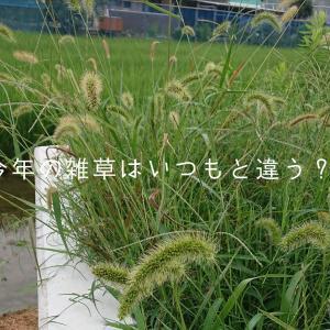 今年の雑草はいつもと違う?!