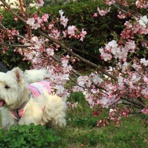 彩り豊か~桜散歩~(^^♪