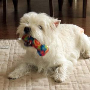 犬と玩具~こだわりの逸品~
