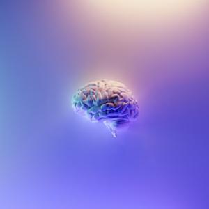「記憶の質や不確実性の評価にも使用されている」ワーキングメモリ領域