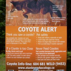 Coyote Alert!