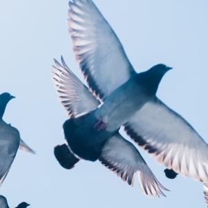 【感想】「小説のお約束」を悉く無視する『鳩の撃退法』を読む者は、「読者の椅子」を下りるしかない