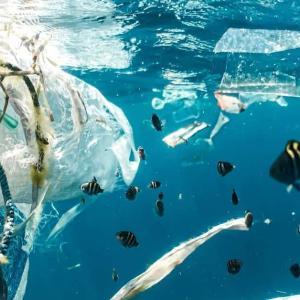 【ゴミ】プラスチックによる環境問題の実態を描く衝撃の映画。我々は現実をあまりに知らない