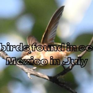 Wild birds found in central Mexico in Augast