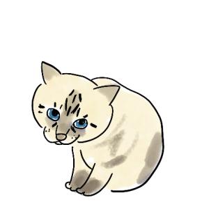 自己紹介(猫編)