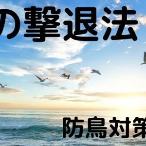 鳩の撃退法!防鳥対策3選