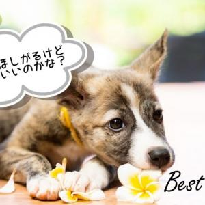 【初心者必見】犬が食べてはいけない危険なものとは?【子犬期要注意】