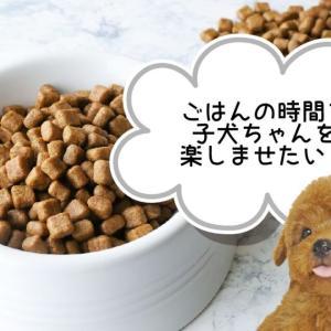 【2~4ヶ月の子犬】ごはんのあげ方【成長・栄養】