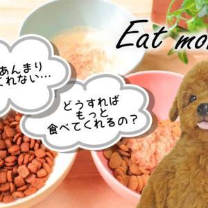 【子犬】ごはんを食べない時の対策【お迎え直後】