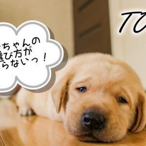 子犬選びポイント3選!【はじめての飼育】