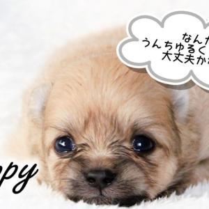 【応急処置】子犬のお迎え直後によくある症状【水様便・血便・嘔吐・ケンネルコフ】