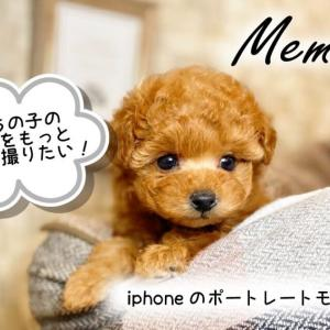 【思い出】子犬の写真の撮り方・コツ【スマホiphoneで十分】