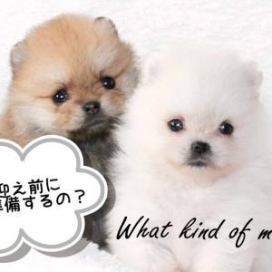 【グッズ徹底解説】子犬のお迎えに必要なもの【必需品準備】