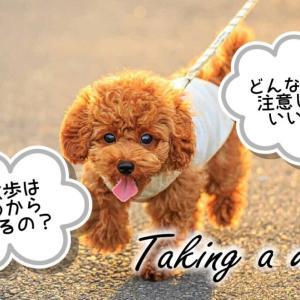 子犬の散歩はいつから?どれくらいの時間すればいいの?歩かない時の対処法は?