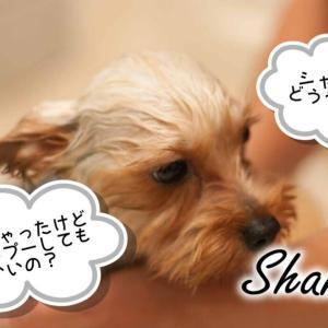 【初心者必見】子犬のシャンプーいつから?頻度は?【やり方・コツ徹底解説】