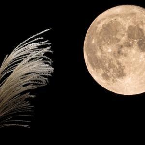 お月見コーデ