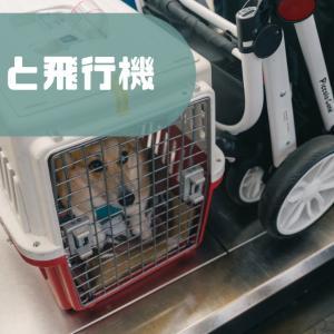 【体験レポ】犬と飛行機に乗る!事前準備や当日の流れ、注意点について解説。