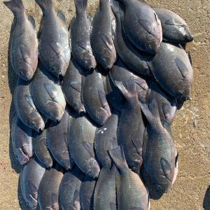 関西での釣り 個人的一番釣れる時期と釣り方