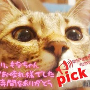 ◆ pick up!◆アメチカンのもなさん もなラジオレポート!