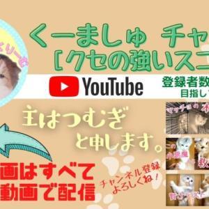 くーましゅ チャンネル紹介