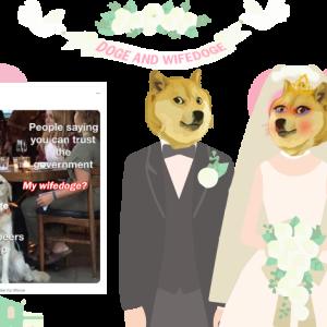 Wifedoge(WIFEDOGE)(仮想通貨)とは一体?ゆるく解説