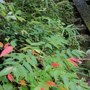 『秋月』(北鎌倉) ハマる人には堪らない「秋月流イタリアン」 初秋の鎌倉散歩で腹ごなし