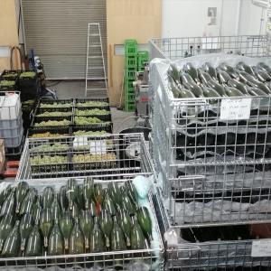札幌『サッポロ藤野ワイナリー』で醸造所見学 北海道ワインを支えるヤングの情熱で焦げちゃいそう + 『ファットリアビオ北海道』(札幌)