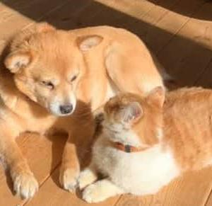 犬と仲良し