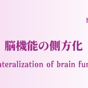 脳機能の側方化