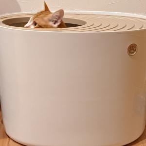 猫のトイレはどれがおすすめ?