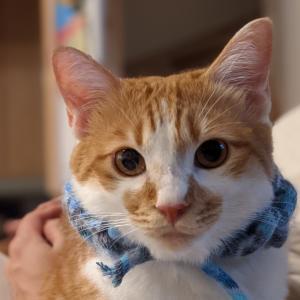 指編みの首輪を作ったけどイヤそうな猫