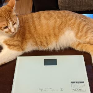 猫の体重を計りたい