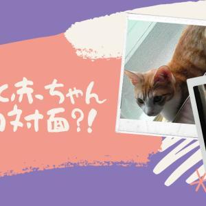 【体験談】猫と赤ちゃんが暮らすには?実際に猫の反応はどうだったか?!
