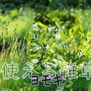 役に立つ雑草(家庭菜園) ー ヨモギ ー