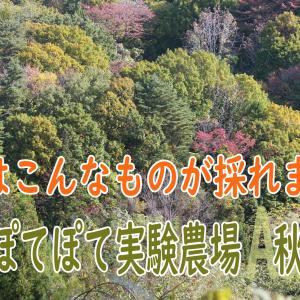 家庭菜園『ぽてぽて実験農場』日記 - 2021年 秋 - 今日はこんなものが採れました~! 9/16
