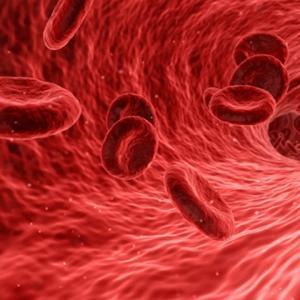 血管の働きと構造!血管を若返らせるストレッチも紹介しますね!