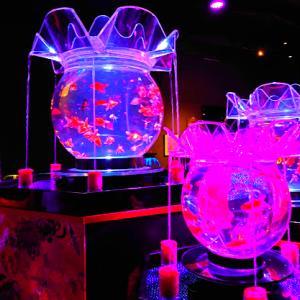 【日本橋室町】アートアクアリウム美術館はリアルな竜宮城の様な空間です。